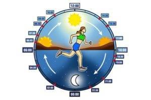 foto ciclo circadiano